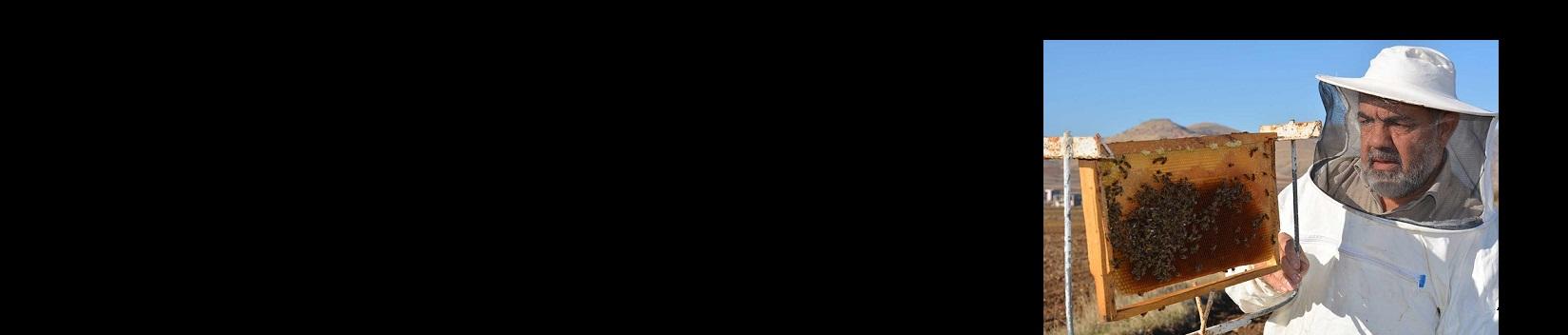 Celal Aksünger