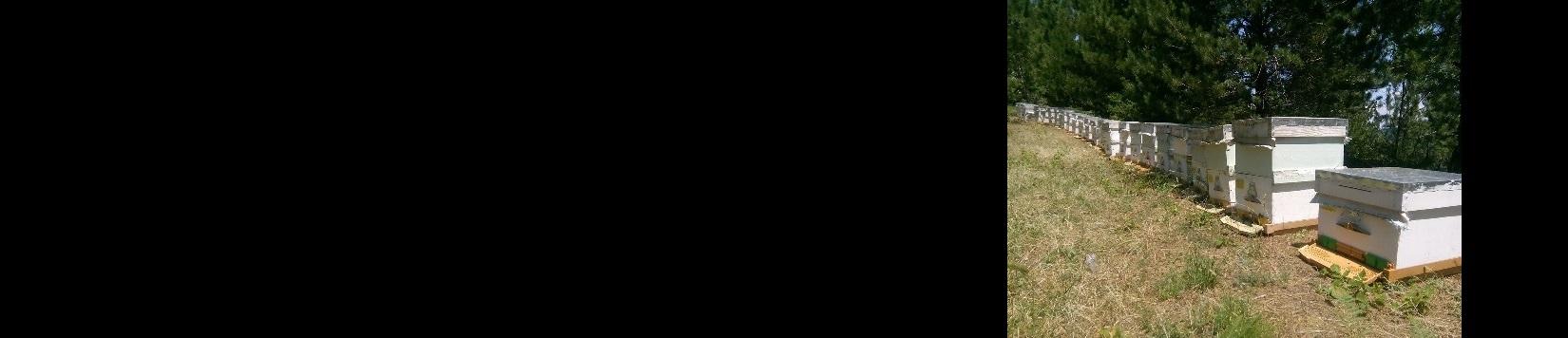 Turan Dinç